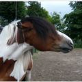 I choose this picture because the horse is showing a clear emotion, he shows he is angry